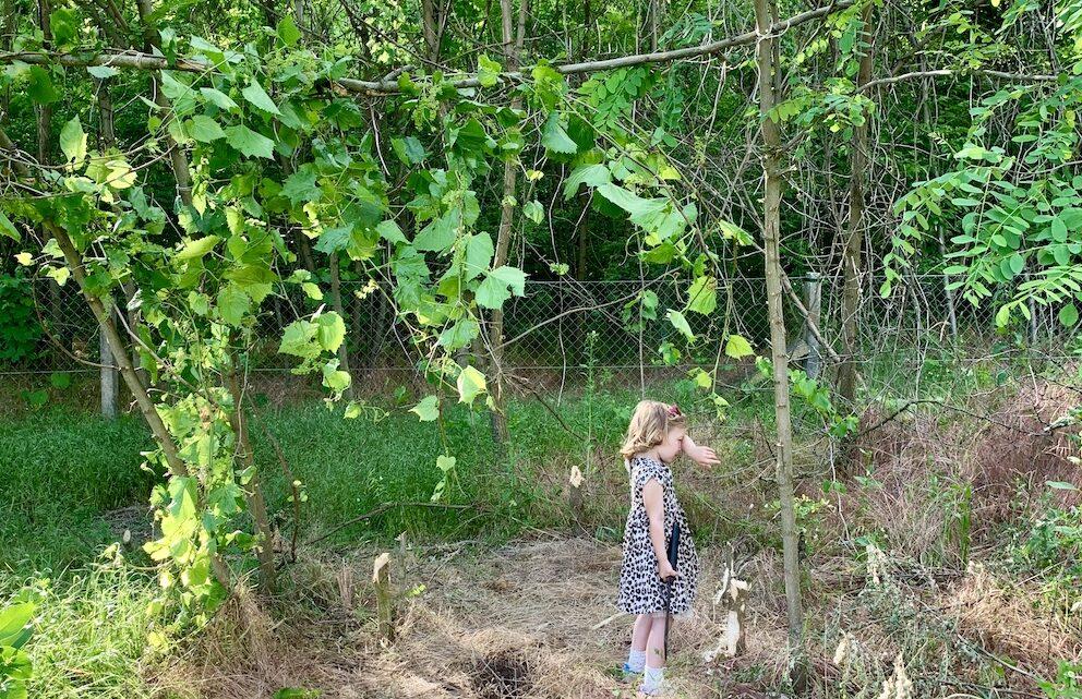erdőkert